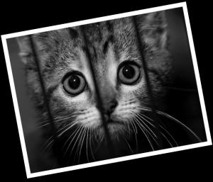 catinshelter
