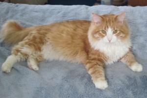 cat picture's 029