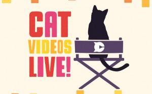 CatVid_web
